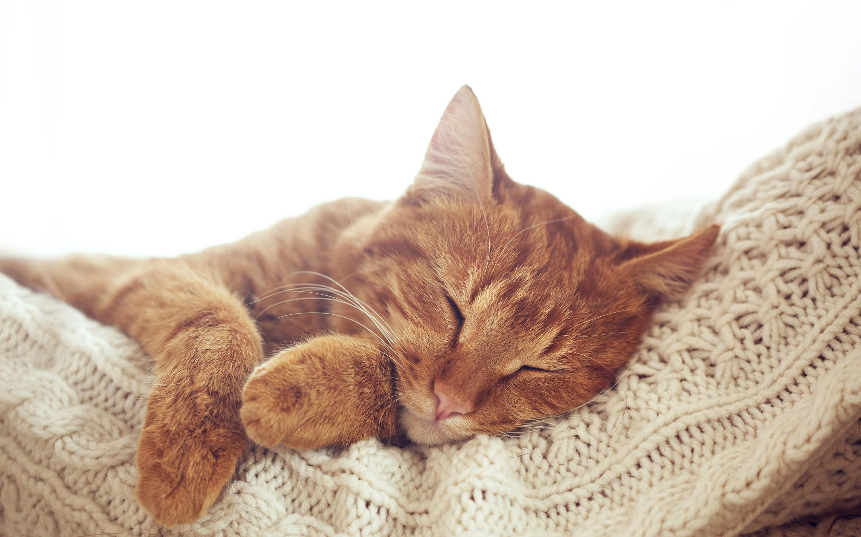 Cats_Sleep_Paws_514308_2880x1800 - Гостиница для кошек Маркиз Москва