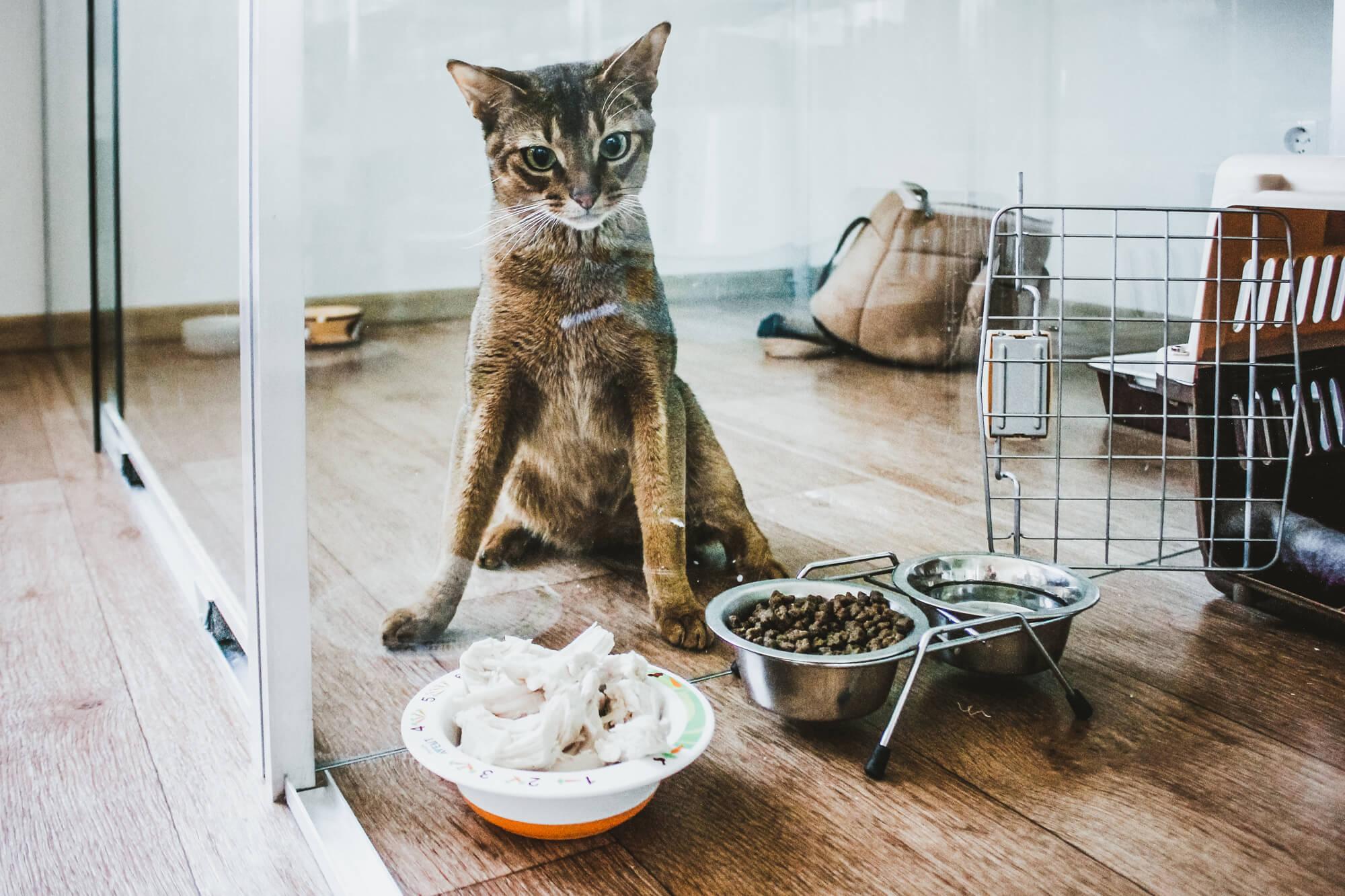 """Гостиница для кошек Маркиз Москва - Фото кото """"Стеша"""""""