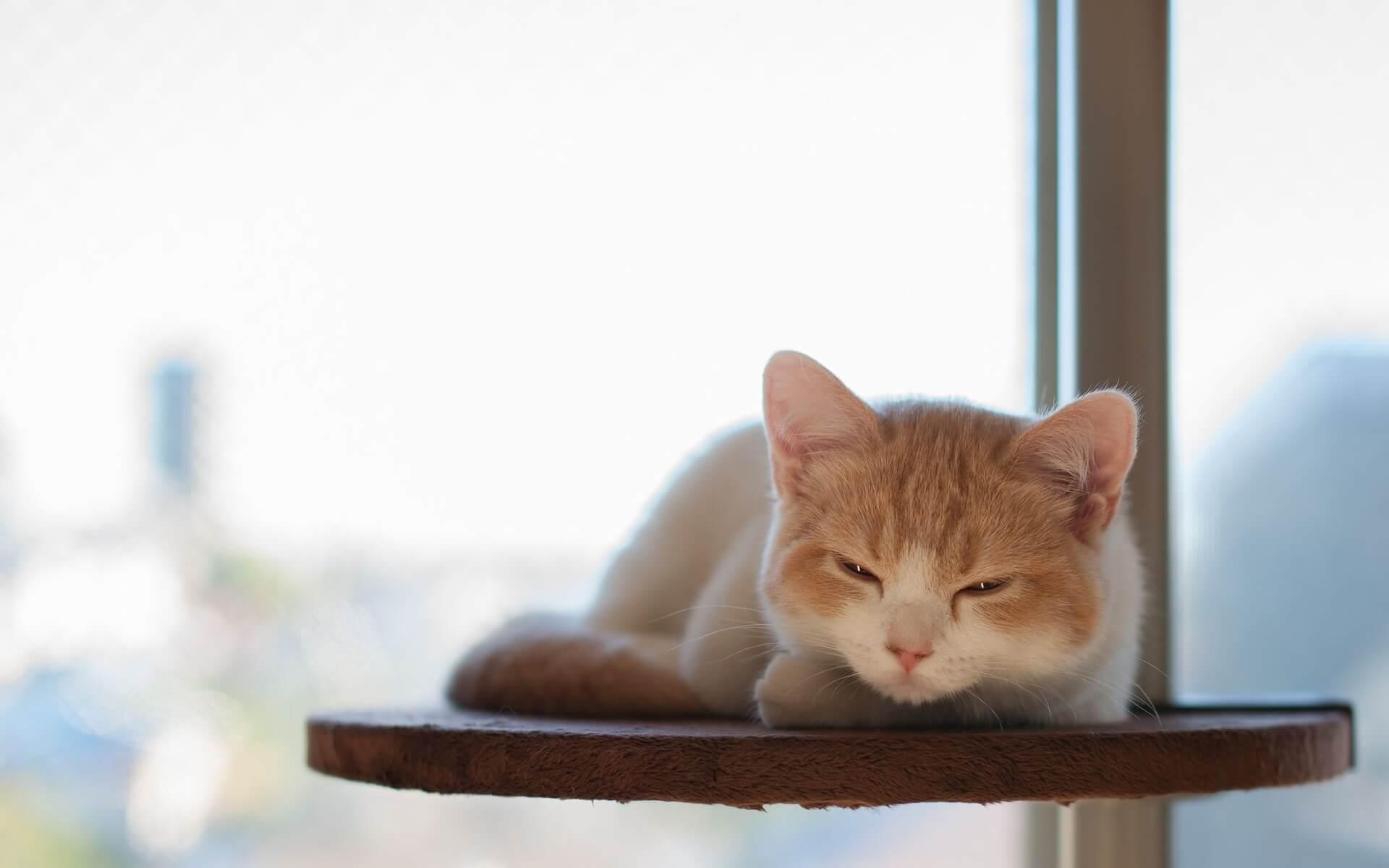 "Фото кошки ""Мурка"" - Гостиница для кошек Маркиз"