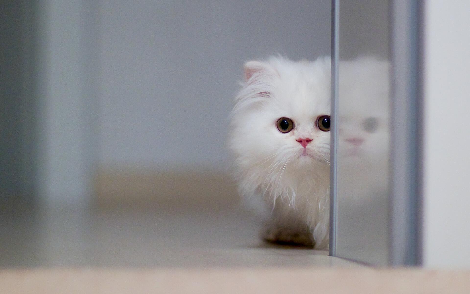 """Фото кошки """"Бьянка"""" - Гостиница для кошек Маркиз"""