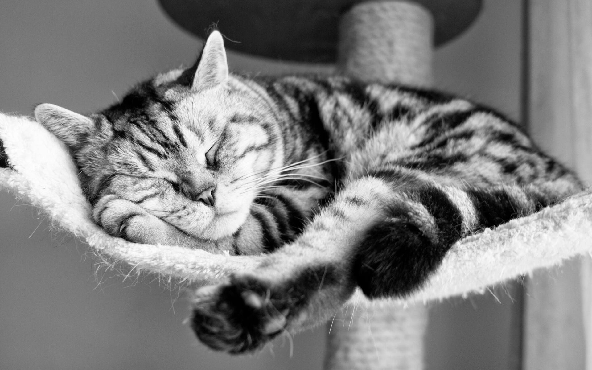 "Фото кошки ""Мила"" - Гостиница для кошек Маркиз"