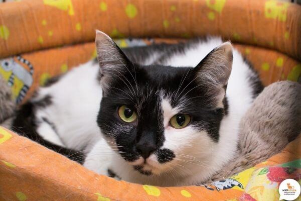 "Фото Кошка ""Снежа"" - Гостиница для кошек Маркиз"