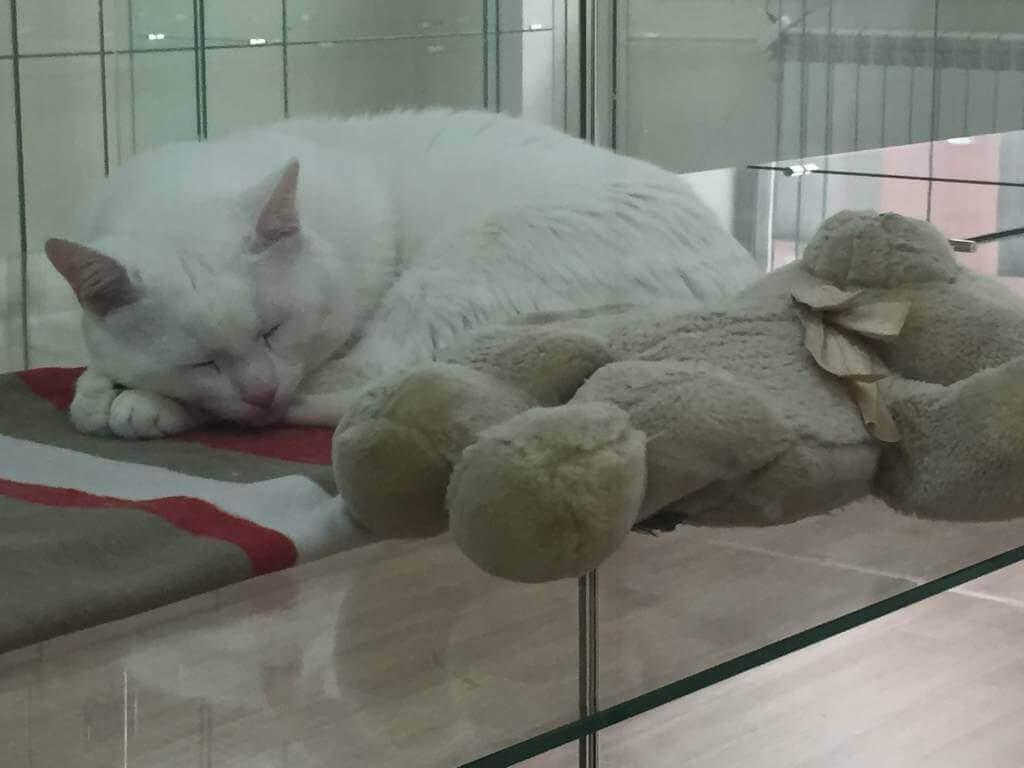 "Гостиница для кошек Маркиз Москва - Фото кошки ""Ника"""
