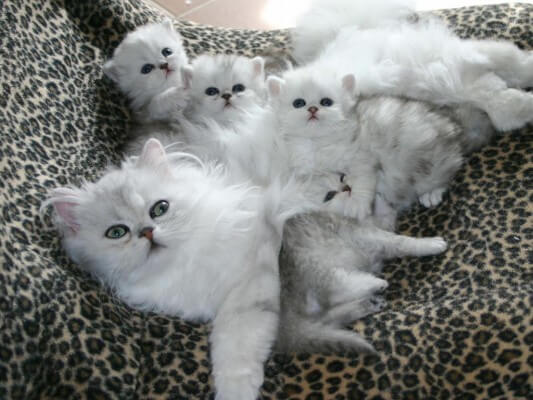 Фото кошки - Гостиница для кошек Маркиз