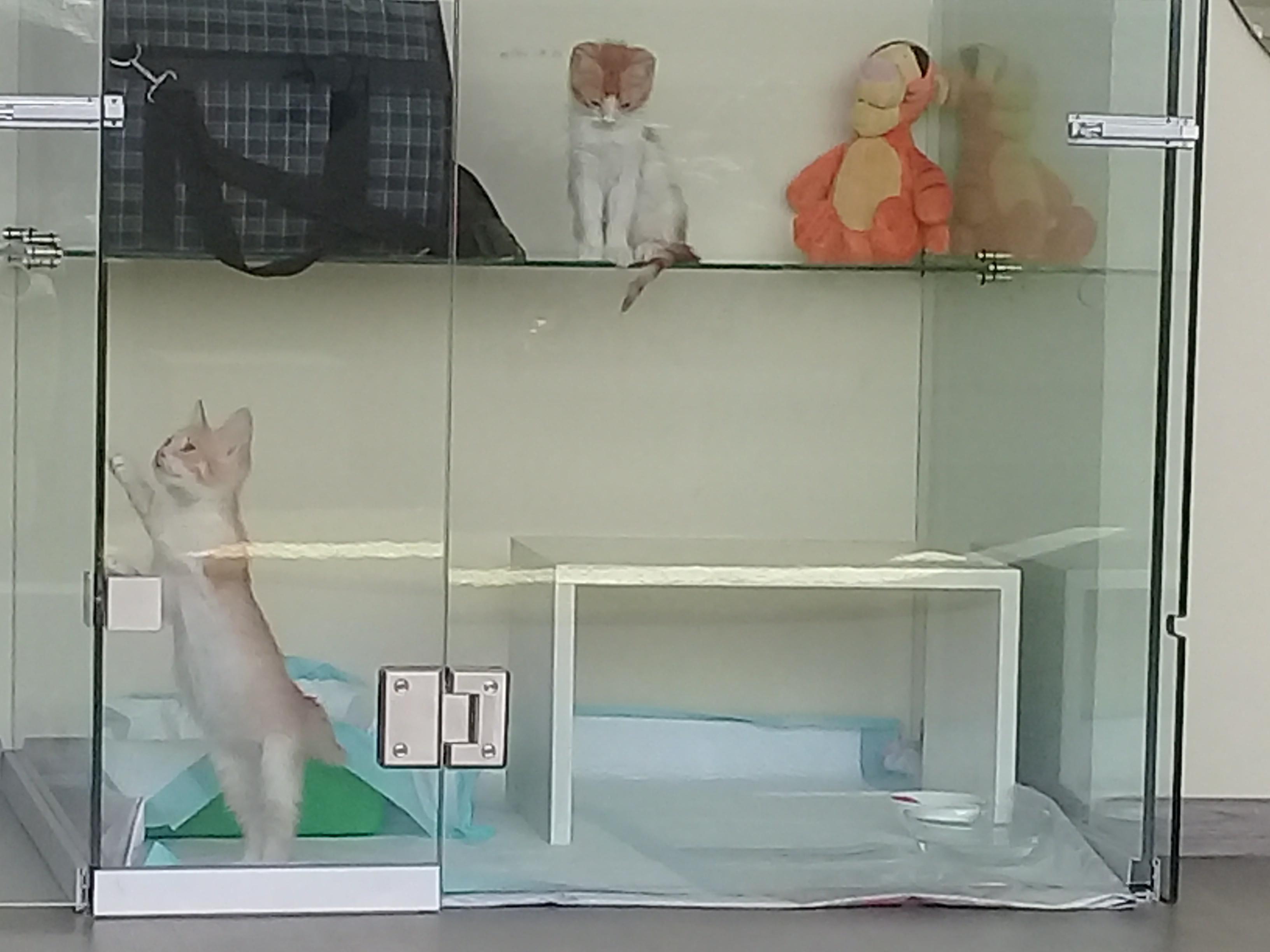 Фото боксов 2 - Гостиница для кошек Маркиз Москва