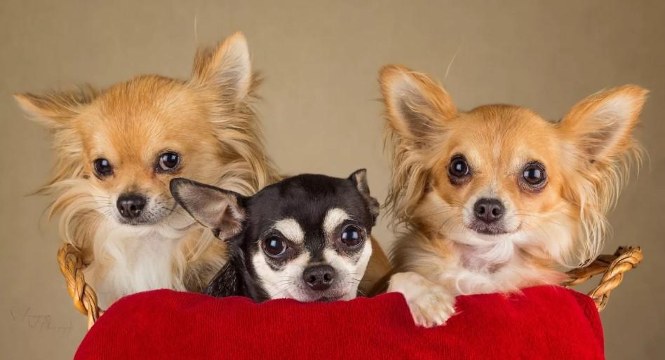 """Фото собачка """"Багзи и его друзья"""" - Гостиница для кошек Маркиз"""