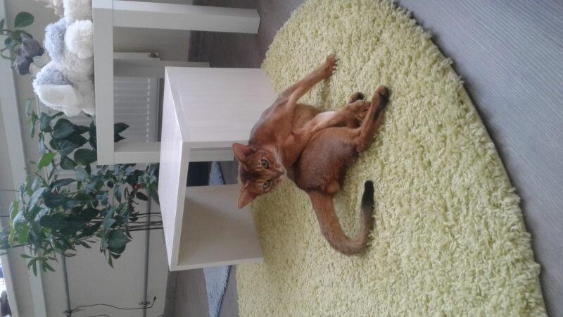 Фото Кото - Гостиница для кошек Маркиз
