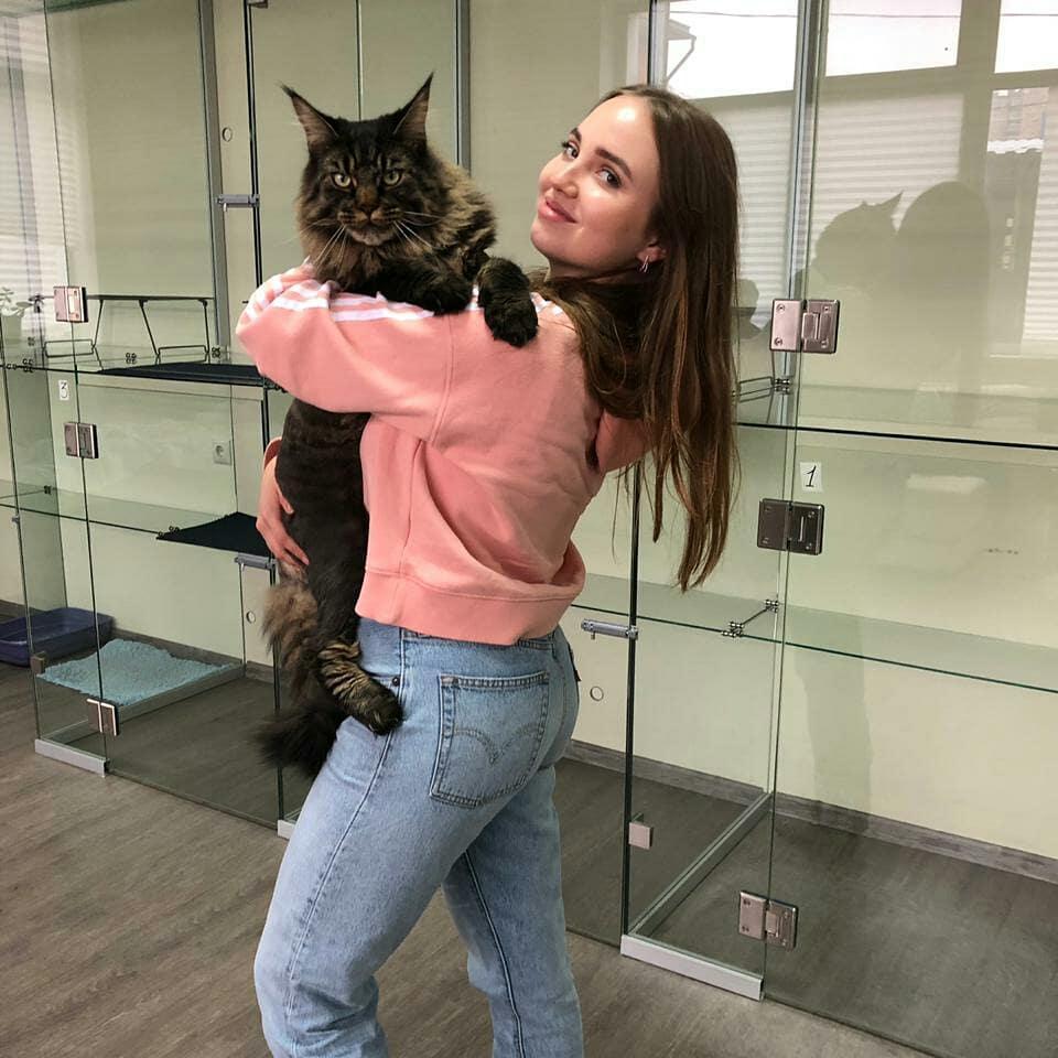 """Фото кото """"Маркиз"""" - Гостиница для кошек Маркиз Москва"""