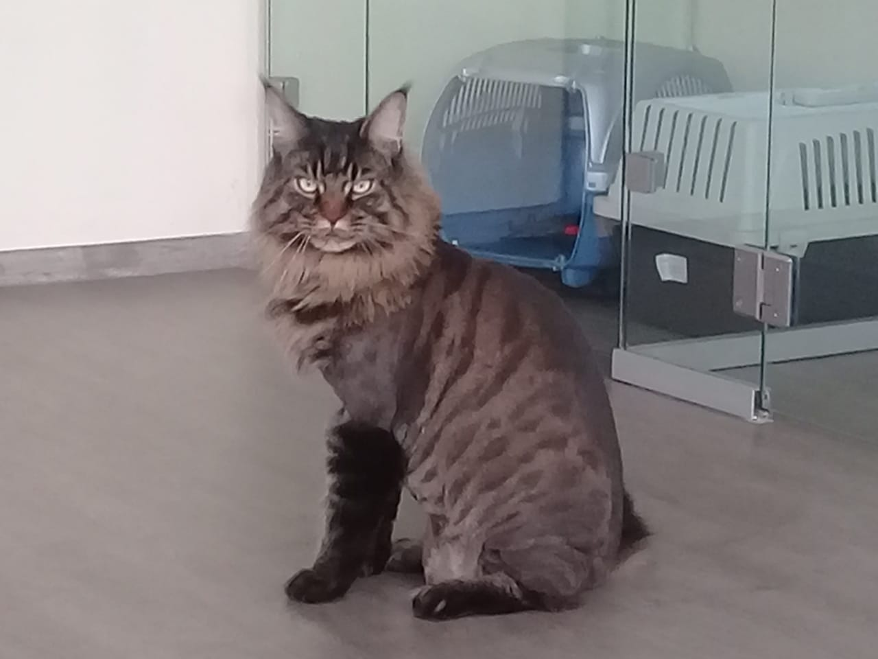Фото Кото 3 - Гостиница для кошек Маркиз