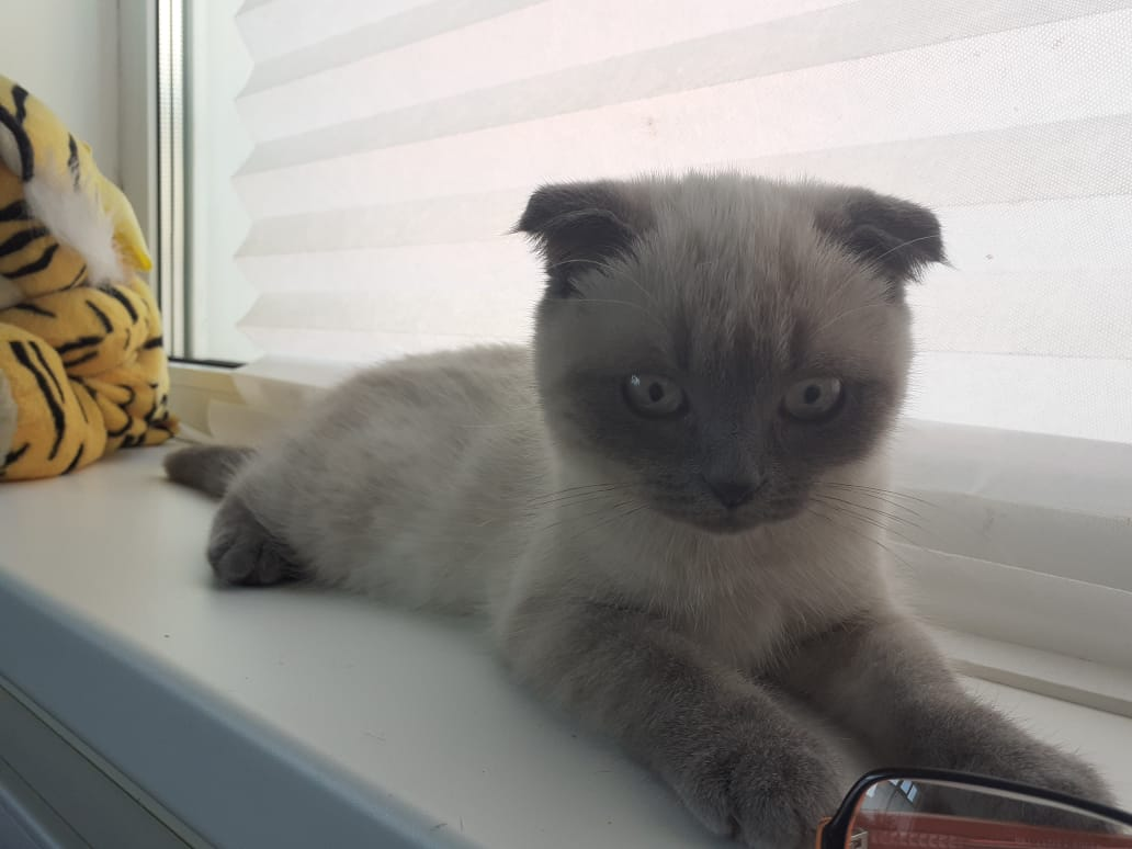 "Фото котенок ""Тиша"" - Гостиница для кошек Маркиз"