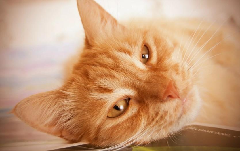 Гостиница для кошек, котов и котиков «Маркиз»