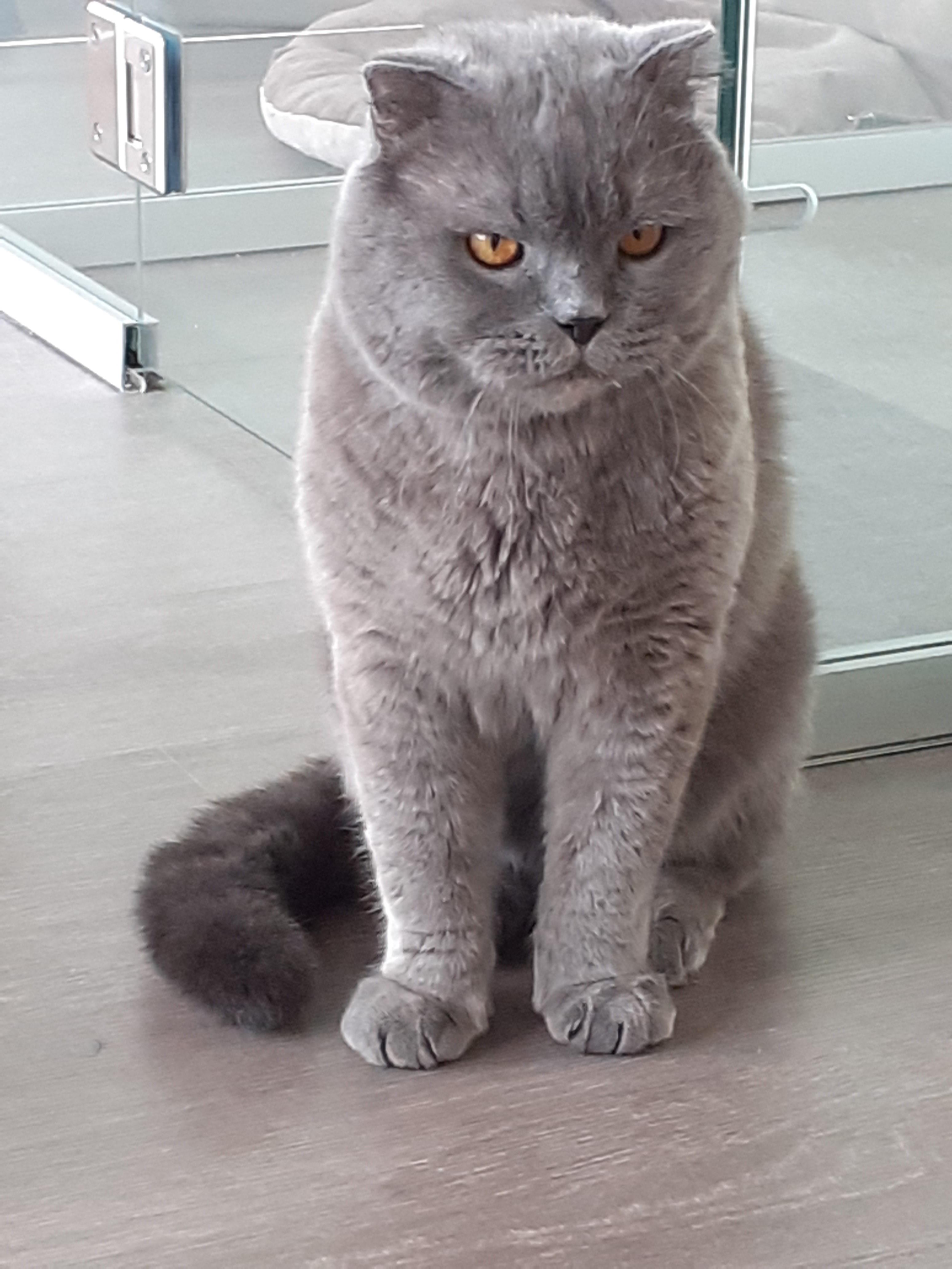 Очаровашка Жо! кот