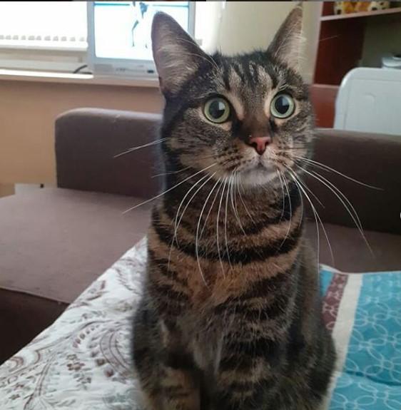 Наш новый постоялец - кошка по имени Кошка.