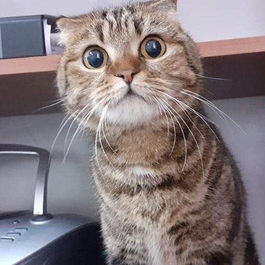 """Кото-фото 47 - передержка кошек в Лобне - гостиница для кошек """"Маркиз"""""""