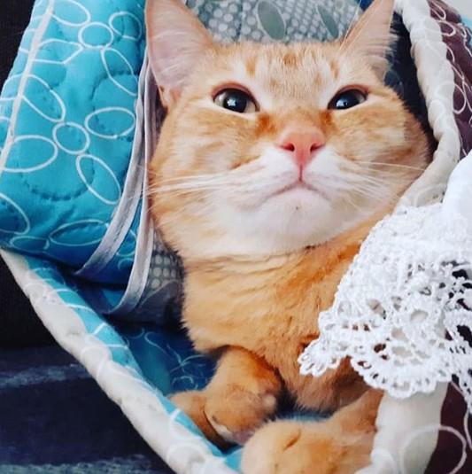 """Передержка кошки в г.Лобня от 400 руб. в гостинице для кошек """"Маркиз"""""""