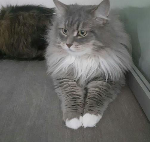 """Передержка кошки в Зеленограде в гостинице для кошек """"Маркиз"""""""