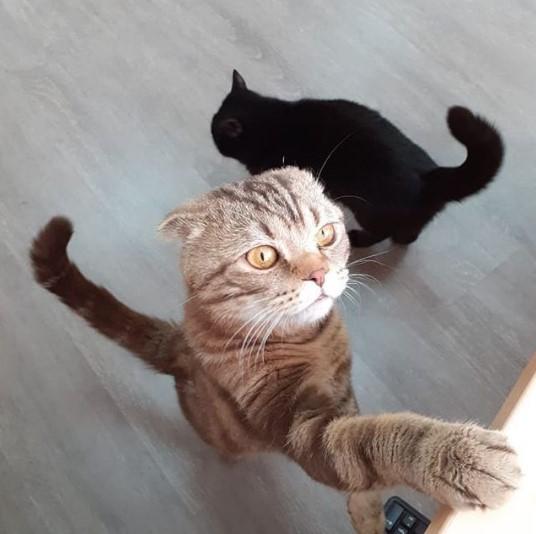 """Передержка кошек в Дмитрове в гостинице для кошек """"Маркиз"""""""