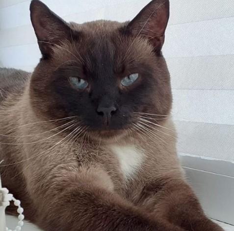 """Cколько стоит передержка кошки в Дмитрове? - Гостиница для кошек """"Маркиз"""""""