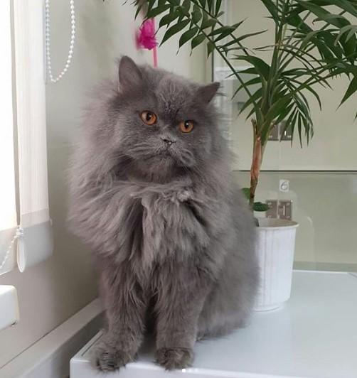 "Кото-фото 48 - гостиница для кошек ""Маркиз"""
