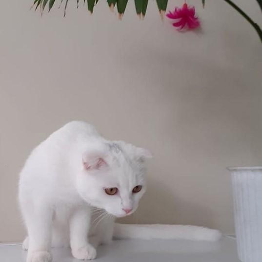 """Передержка кошек в Лобне - Гостиница для кошек """"Маркиз"""""""