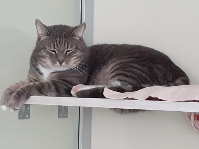 """Cколько стоит передержка кошки в Зеленограде? - Гостиница для кошек """"Маркиз"""""""