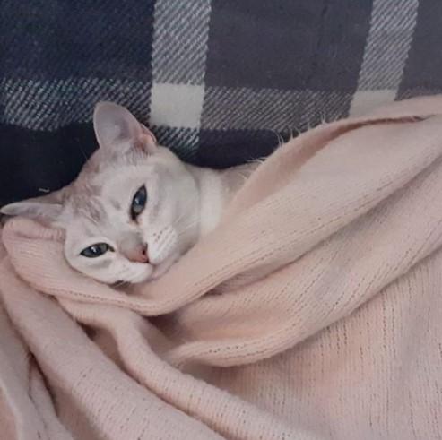 """Передержка кошек в Зеленограде - Гостиница для кошек """"Маркиз"""""""