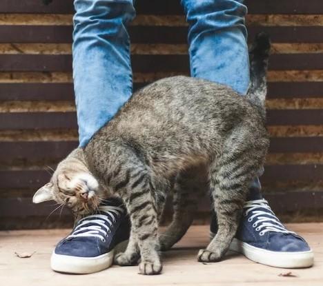 """Зачем кошка трется о ноги хозяина? -гостиница для котов и кошек """"Маркиз - Мы рядом Долгопрудный, Дмитров, Лобня, Зеленоград, Пушкино, Мытищи, Химки!"""