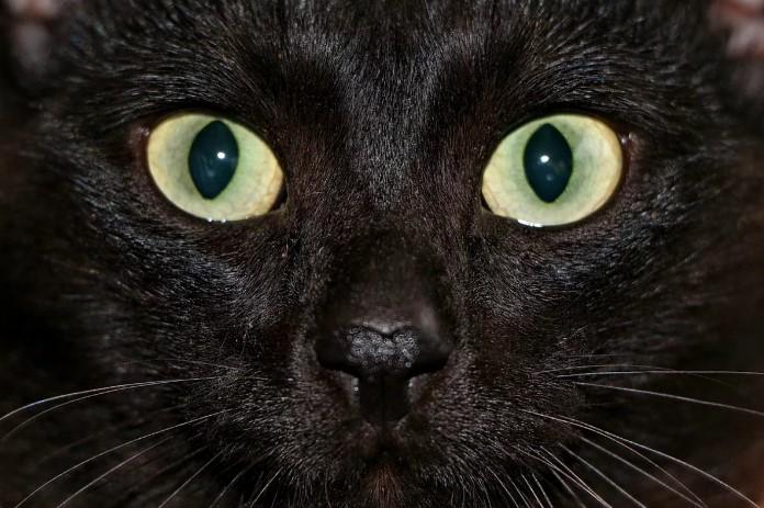 Ночное зрение у кошек - передержка кошек в Лобне