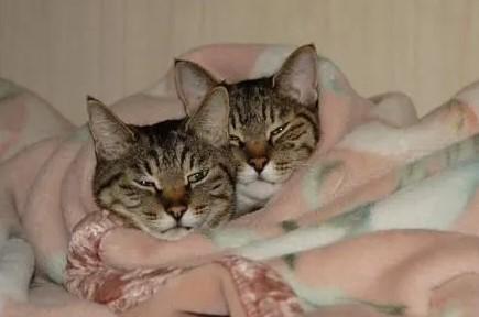 Передержка кошек в Пушкино