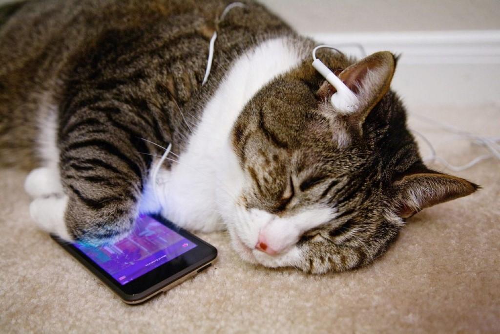 Кошки – уникальные животные - передержка кошек в Пушкино