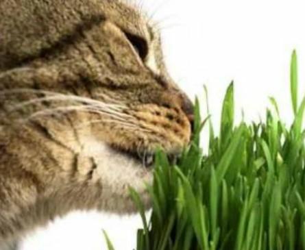 """Когда началось одомашнивание кошек? — Передержка кошек в Лобне в гостинице для кошек """"Маркиз"""""""