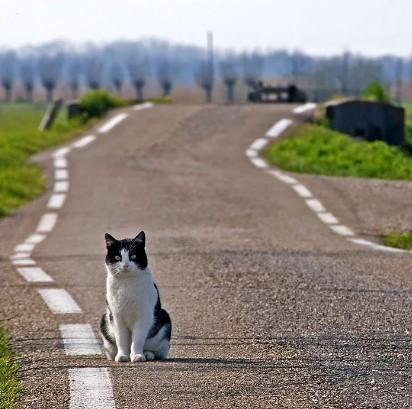 """Могут ли кошки найти дорогу домой? — Передержка кошек в Пушкино в гостинице для кошек """"Маркиз"""""""