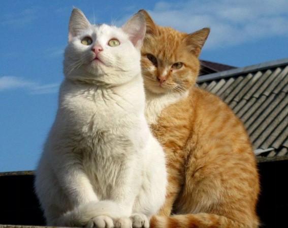 """Передержка кошек в Зеленограде в гостинице для кошек """"Маркиз"""""""