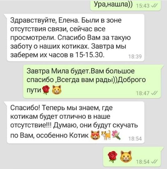 Otzivi-o-gostinice-dlia-koshek-markizhotel.ru