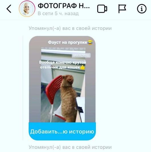 kotofoto-125-gostinica-dlia-koshek-markizhotel.ru