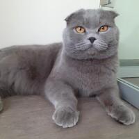 Котофото 71 — Гостиница для кошек «Маркиз»