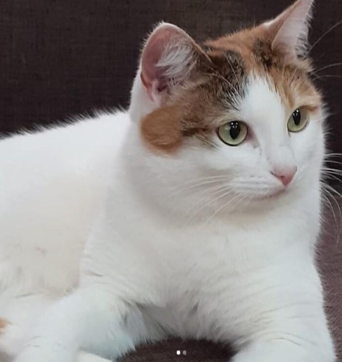 Котофото 143 — Гостиница для кошек «Маркиз»