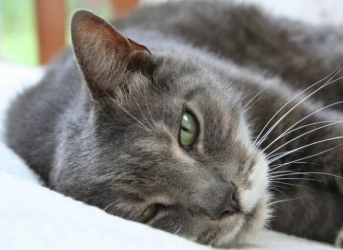 Стоимость передержки кошек в ближайшем Подмосковье