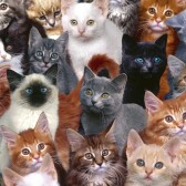 В мире более 250 пород кошек!