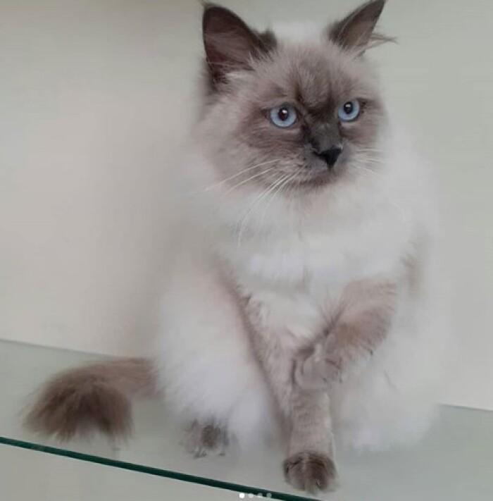 Котофото 99 — Гостиница для кошек «Маркиз»