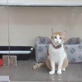 Cколько стоит передержка кошки в Лобне?