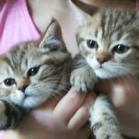 Котофото 104 — Гостиница для кошек «Маркиз»