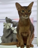 Котофото 121- Гостиница для кошек «Маркиз»