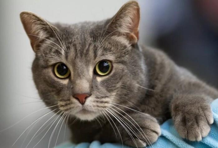 Кошка шипит: что это значит?