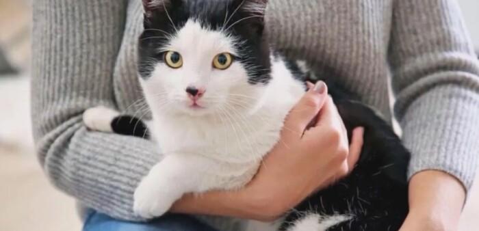 Сколько стоит передержка кошек в Пушкино?