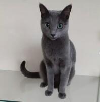 Котофото 58 — Гостиница для кошек «Маркиз»