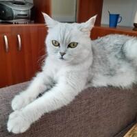 Котофото 65 — Гостиница для кошек «Маркиз»