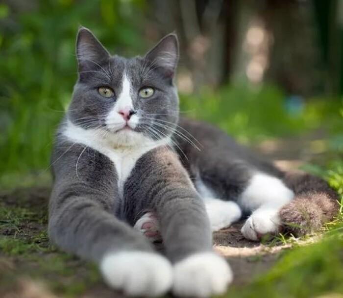 Чем покорили людей кошки?