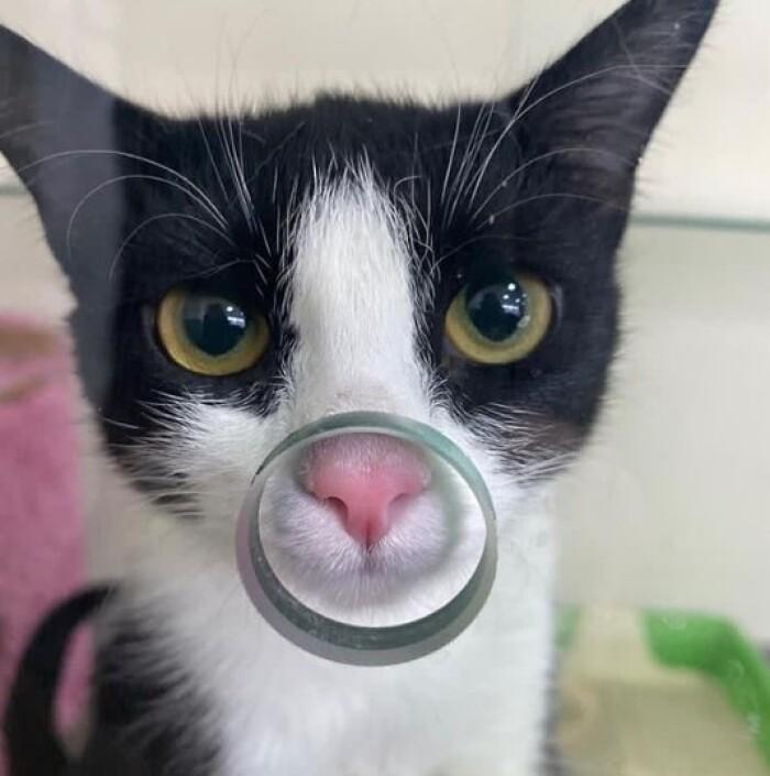 Котофото 132 — Гостиница для кошек «Маркиз»
