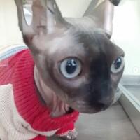 Котофото 135 — Гостиница для кошек «Маркиз»